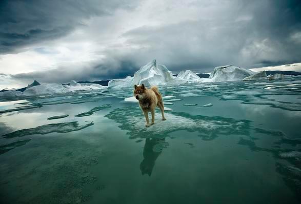 arctica-the-vanishing-north-2.jpg | Image