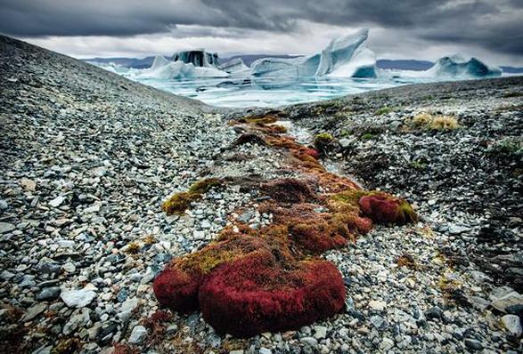 arctica-the-vanishing-north-6.jpg