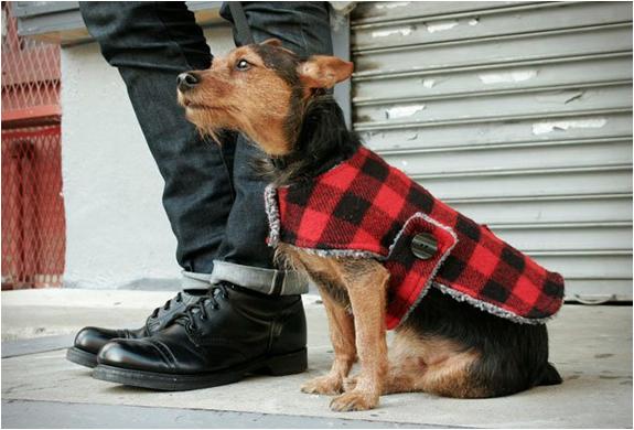 billy-wolf-dog-jackets-2.jpg   Image