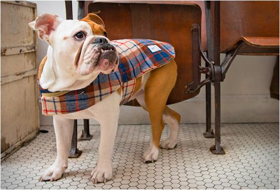 billy-wolf-dog-jackets-3.jpg   Image
