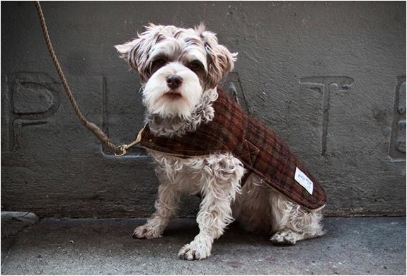 billy-wolf-dog-jackets-4.jpg   Image