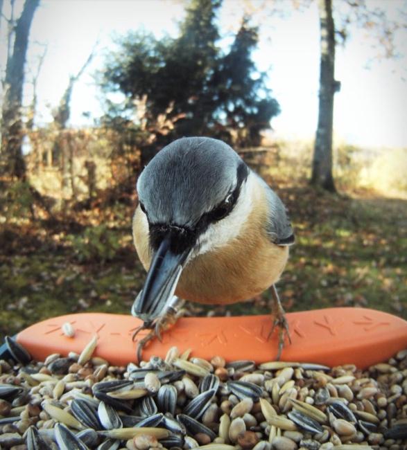 bird-buddy-6.jpg