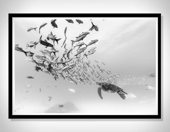 christian-vizl-ocean-prints-3.jpg | Image
