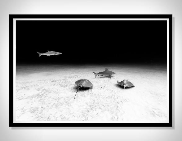 christian-vizl-ocean-prints-4.jpg | Image