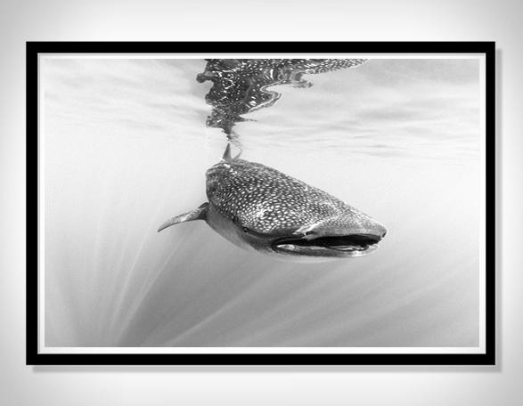 christian-vizl-ocean-prints-7.jpg