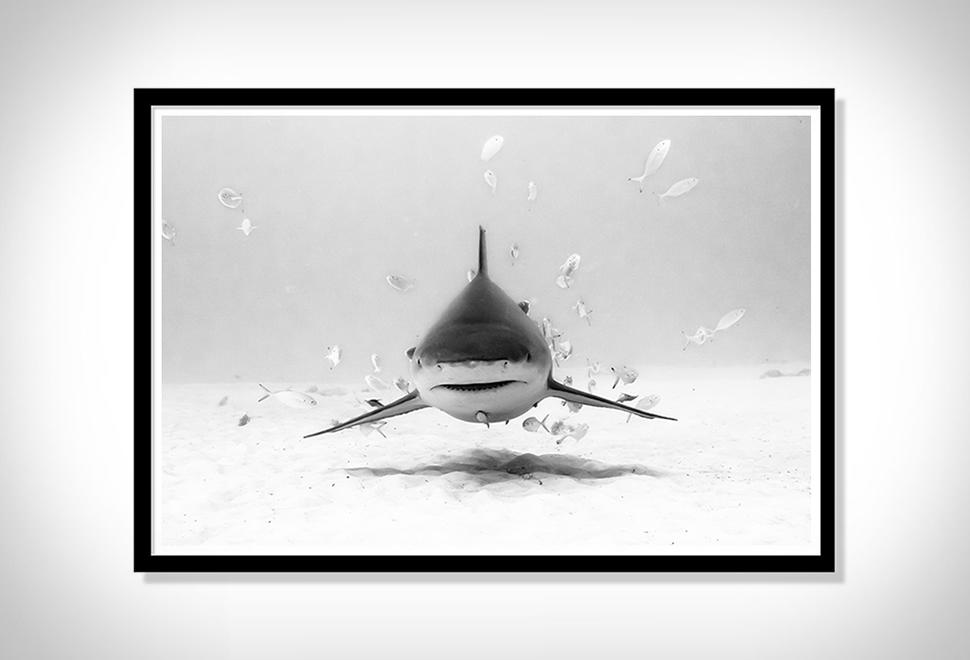 Christian Vizl Ocean Prints | Image