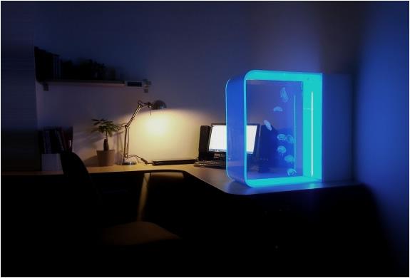 Cubic | Desktop Jellyfish Aquarium | Image