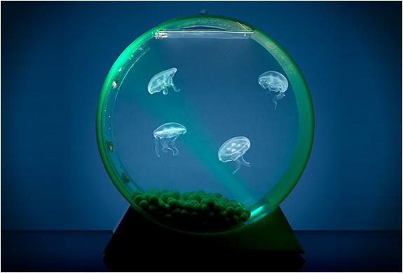 Desktop Jellyfish Tank | Image