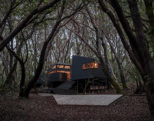 forest-house-15.jpg