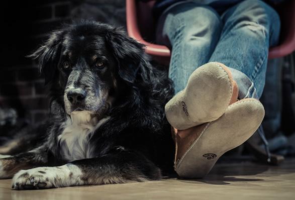 glerups-slippers-3.jpg | Image