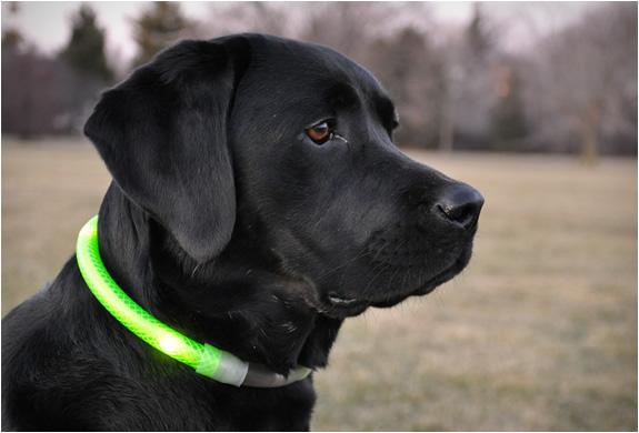 glowdoggie-2.jpg | Image