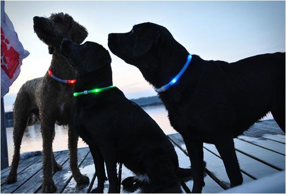 glowdoggie-3.jpg | Image