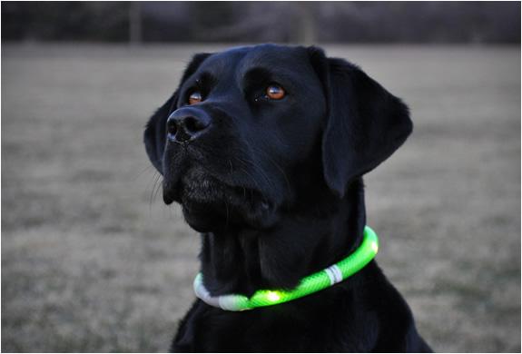 glowdoggie-4.jpg | Image