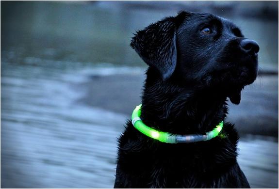Glowdoggie | Image