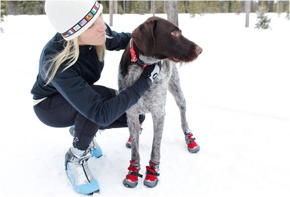 img_dog_polar_trex_boots_5.jpg | Image