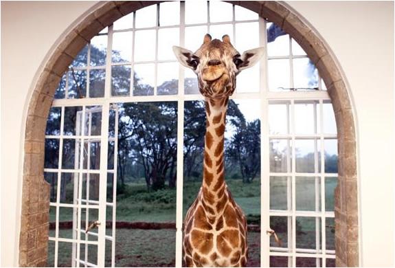 img_giraffe_manor_nairobi_2.jpg | Image