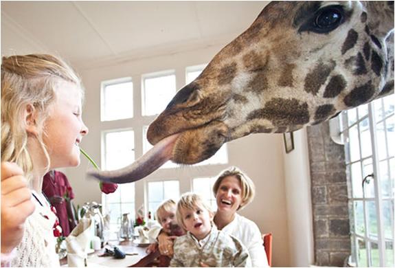 img_giraffe_manor_nairobi_5.jpg | Image