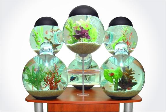 img_labirinth_aquarium_2.jpg | Image