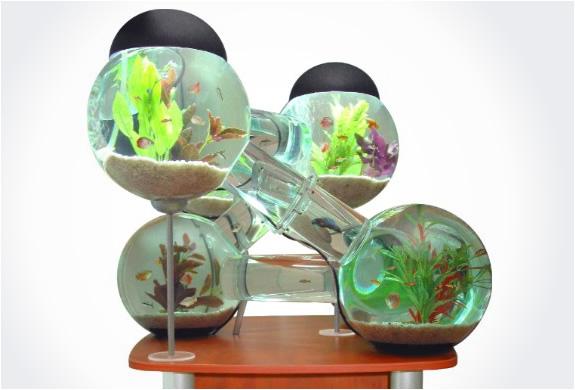 img_labirinth_aquarium_3.jpg | Image