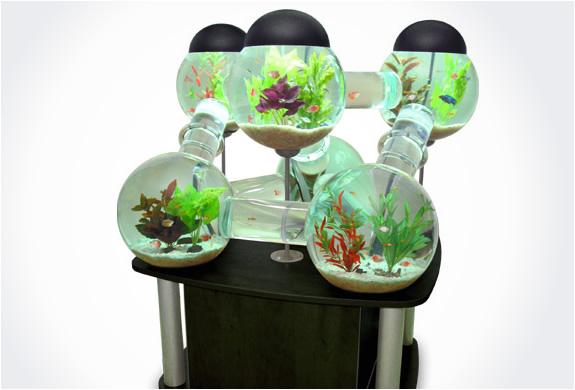 img_labirinth_aquarium_4.jpg | Image