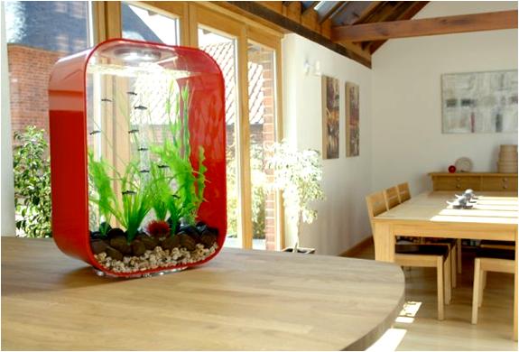 img_reef_one_biorb_aquariums_4.jpg | Image
