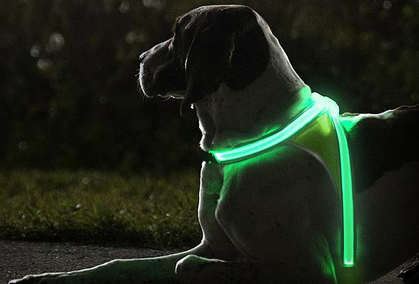 lighthound-2.jpg | Image