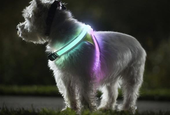 lighthound-3.jpg | Image