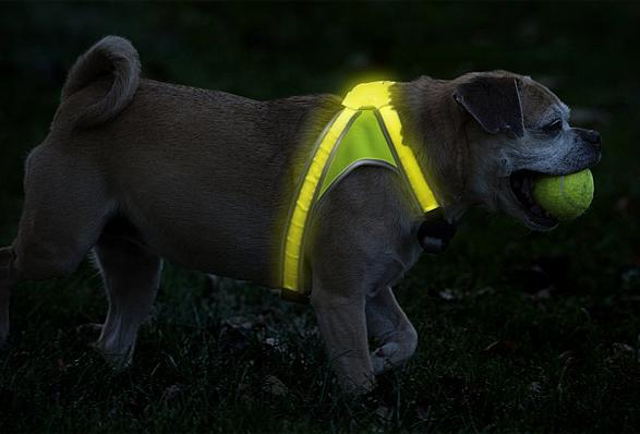 lighthound-4.jpg | Image