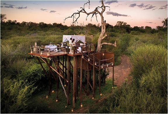 lion-sands-game-reserve-south-africa-7.jpg
