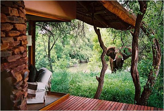 makanyane-safari-lodge-2.jpg | Image