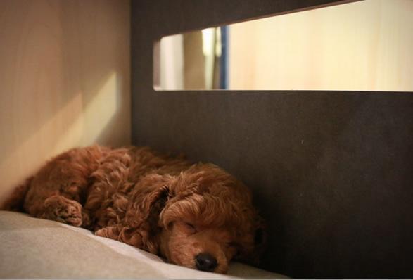minimalist-dog-houses-4.jpg | Image