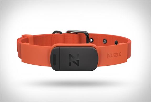 NUZZLE GPS COLLAR | Image