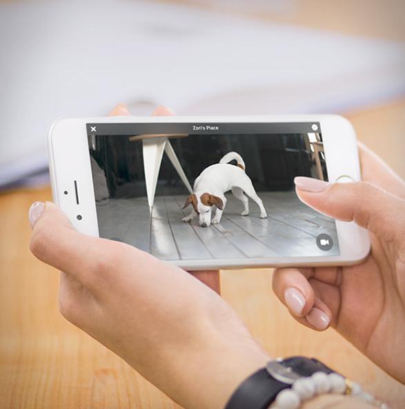 petcube-bites-pet-camera-5.jpg | Image
