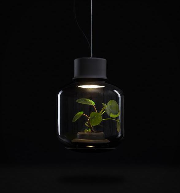 plant-light-mygdal-3.jpg | Image
