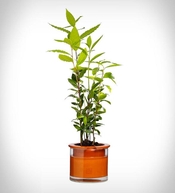 self-watering-pots-3.jpg | Image