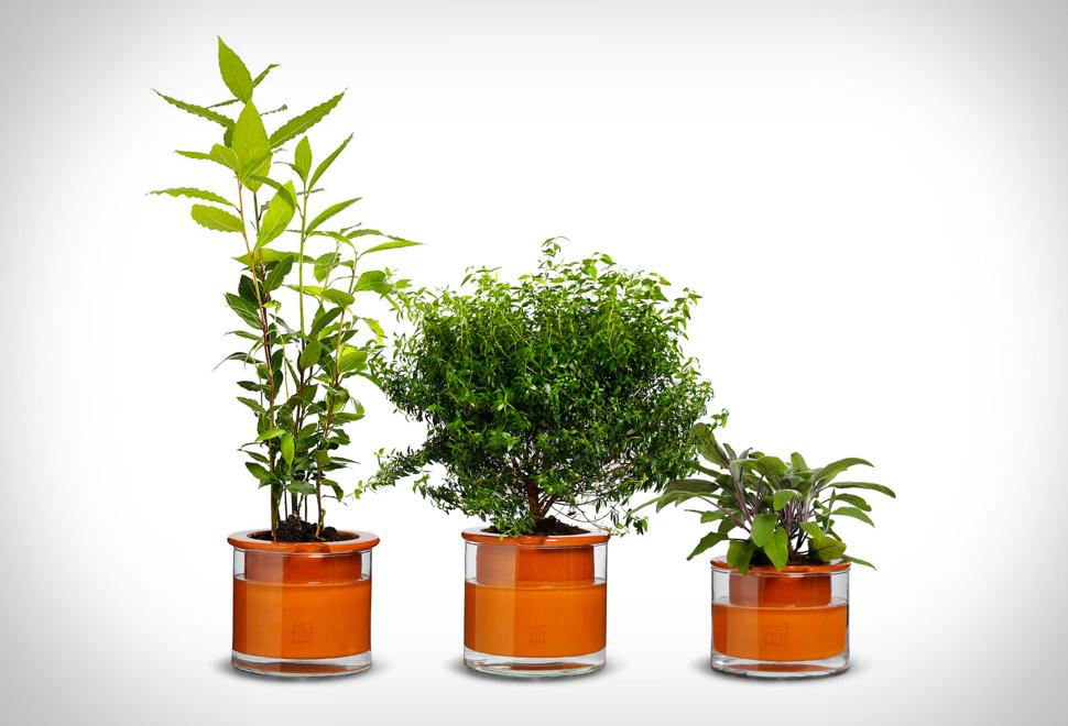 Self Watering Pots | Image