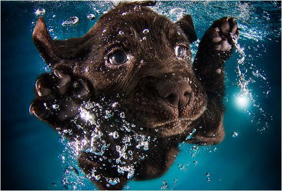 seth-casteel-underwater-puppies-2.jpg | Image
