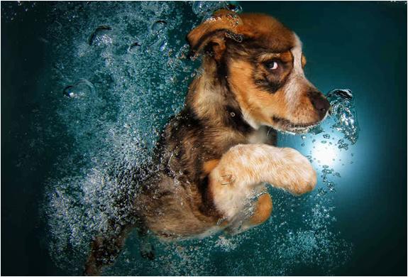 seth-casteel-underwater-puppies-3.jpg | Image