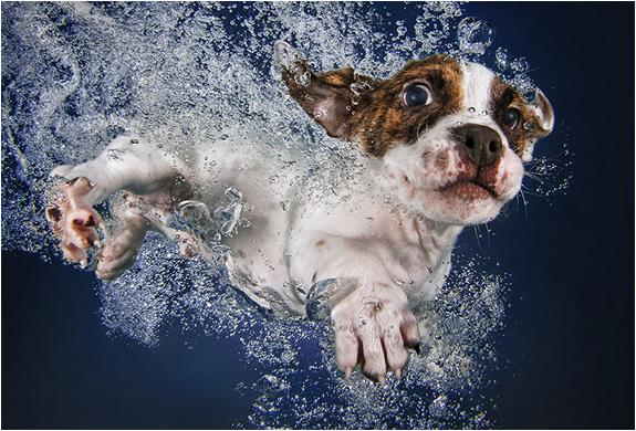 seth-casteel-underwater-puppies-4.jpg | Image