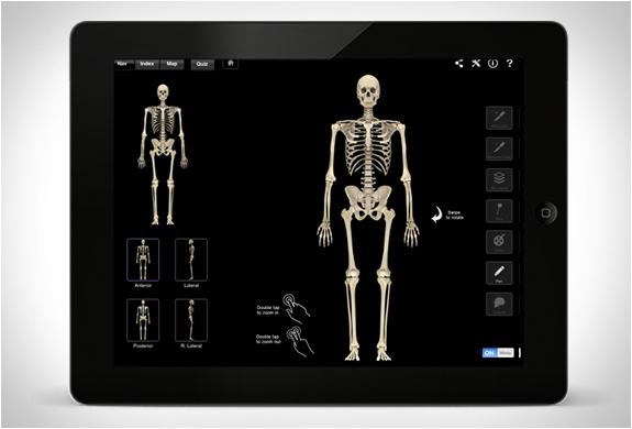 skeleton-system-pro-3-3.jpg | Image