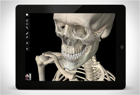 skeleton-system-pro-3-4.jpg | Image