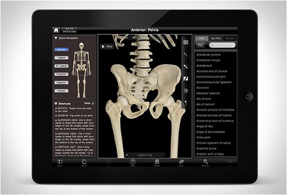 skeleton-system-pro-3-5.jpg | Image