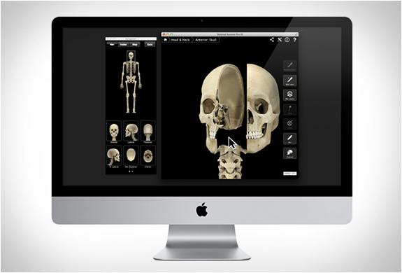 skeleton-system-pro-3-7.jpg
