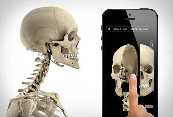 Skeleton System Pro Iii | Image