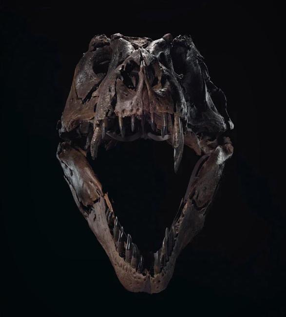 stan-t-rex-skeleton-2.jpg | Image