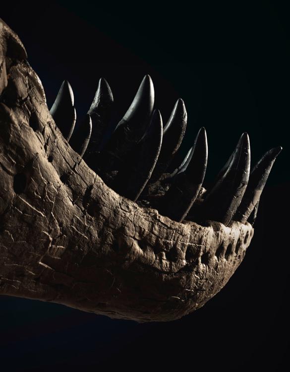 stan-t-rex-skeleton-4.jpg | Image