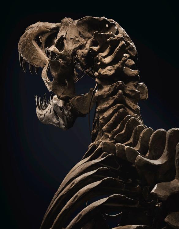 stan-t-rex-skeleton-5.jpg | Image
