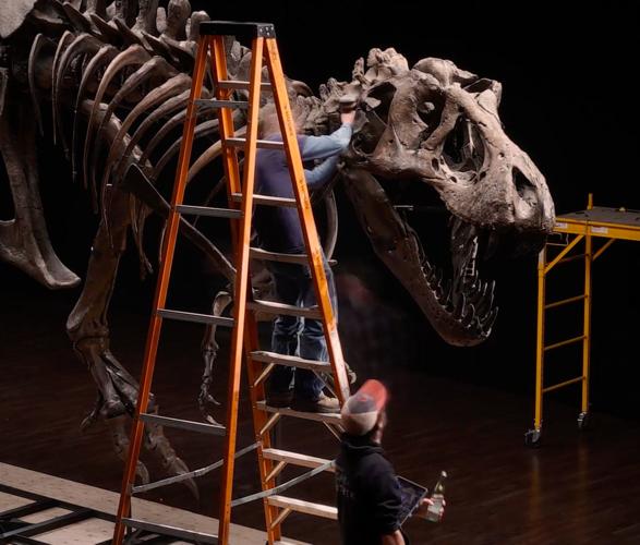 stan-t-rex-skeleton-6.jpg