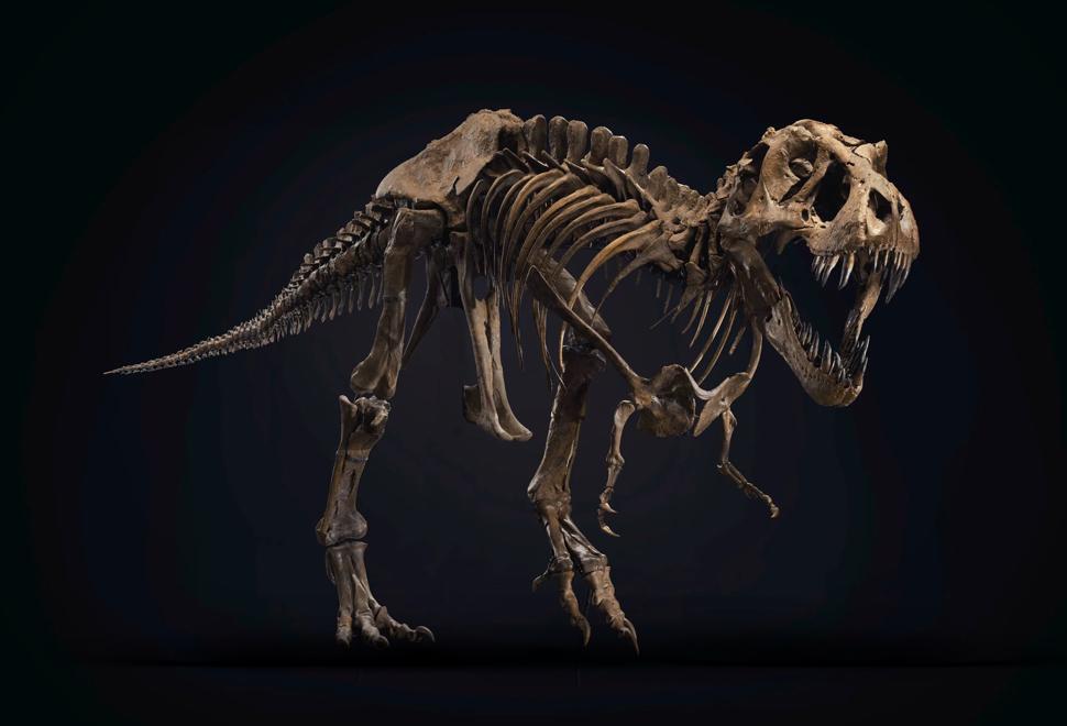 Stan T-Rex Skeleton | Image