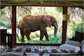 thum_makanyane-safari-lodge.jpg